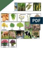 Clasificación de Plantas y Animales