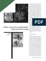 Orden y Caos en la Organización Social de las Hormigas