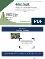 CB1-Propagacion Malanga-Lugmaña-Velasco.pptx