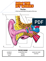 Parts of the Ear Worksheet