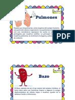 Organos Internos Del Cuerpo PDF