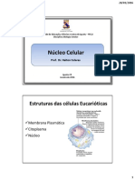 aula 05- núcleo.pdf