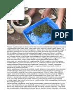 Cara Membuat Pestisida Organik