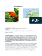 Rupícola peruvianus