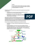 Metabolismo de Los Ácidos Nucleicos