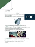 mariposas.docx