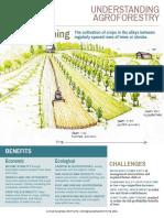 Alley Cropping-Understanding Agroforestry