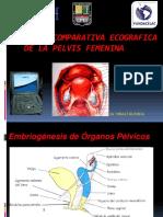 Anatomia de pelvis ecografica
