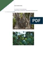 Some Endangered Flora of Andaman