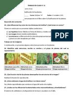 TC12 CUESTIONARIO PLANTAS