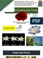 Morfologia Das Flores