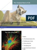 Chapter 2 - Chemical Basis of Life