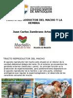 TEMA 4. TRACTO REPRODUCTOR DEL MACHO Y LA HEMBRA.pdf