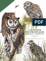 Los búhos Neotropicales