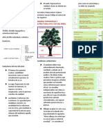 Test del árbol.docx