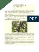 TEHNOLOGIA_DE_CULTURA_A_COACAZULUI_NEGRU.doc