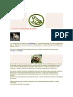 ANFIBIOS.docx