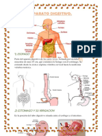Digestivo Anato u
