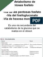 Metabolismo de Las Pentosas Fosfato