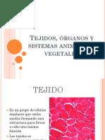 Tejidos, órganos y sistemas animales y vegetales_20190210