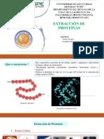 Extraccion de Proteinas