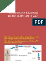 KULTUR JARINGAN HEWAN 01.ppt