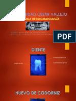 Trabajo de Imageneología