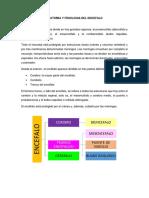 Anatomia y Fisiologia Del Encefalo (3)