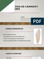 Morfologia de Caninos y Premolares