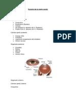 Función de la visión ocular