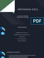 Arawuana Azul