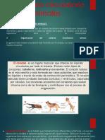 El Aparato Circulatorio en Los Animales 2