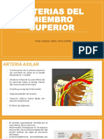 Arterias, Venas y Linfáticos