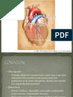 Generalidades Del CorazónNN