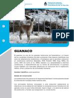 Ficha Guanaco72