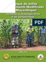 GMO in Mozambique Report Port Web