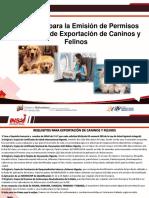 Requisitos-Para-la-Exportacion-de-Caninos-y-Felinos.pdf