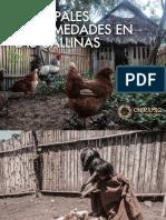 Principales enfermedades en las gallinas