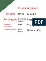 aparato excretor.docx