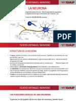 Neuronas Expo
