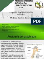 AP y Lateral Antebrazo
