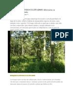 Bosques Nativos o Cultivados