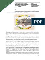 GUIA CICLOS.pdf