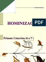 HORMINIZACION