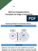 Retículos, Golgi e Lisossomos.pptx
