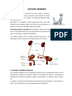 SISTEMA URINARIO.doc