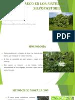 El sauco en los sistemas silvopastoriles.pptx