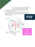 Protocolo-Limpeza de Pele Com Tratamento de Acne