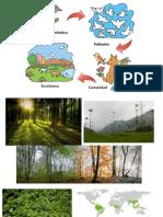 Diapositivas ecosistemas