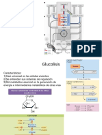 GLUCOLISIS-211